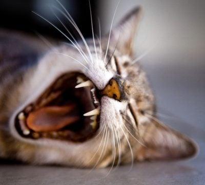 Стоматологические услуги для животных