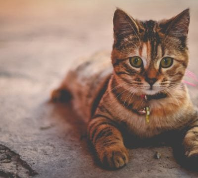 Лечение кошек на дому и в ветклинике