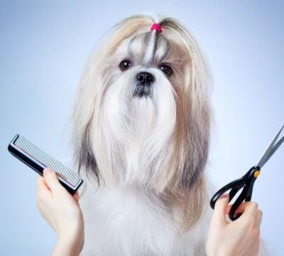 Груминг домашних собак