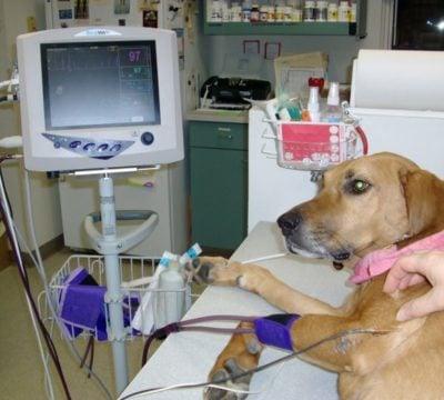 Необходимость нахождения животного в стационаре ветеринарной клиники?