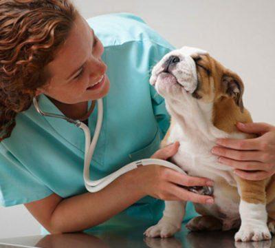 Как не ошибиться при выборе ветеринара для своего питомца?